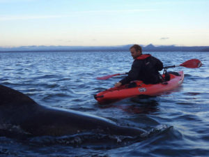 Sea kayaking in Iceland